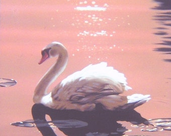 Mute Swan 17 x 11 print (image 14.5 x 10.5) personally signed by artist RUSTY RUST / S-2-P