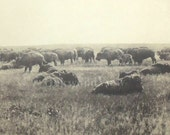 Buffalo Print by Edward S. Curtis, Native American Indian Land, As It Was In the Old Days, 14x17 Vintage Sepia Bookplate Art, FREE SHIPPING