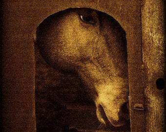 Horse Western Fine Art Photography Texas Rustic Art Print Southwest Home Decor