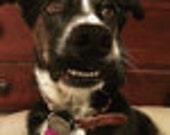 Custom collar for Olivia in Maine