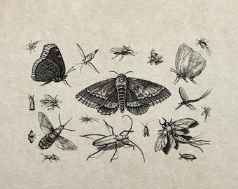 80% OFF - Insects (Image 9) - PNG / JPG Digital Image Download - Transfer / Iron on / Clip-art / Commercial Use