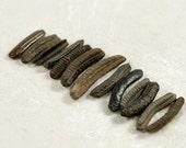 13 tiny thin fossilized ray dental plates teeth (no.c10)