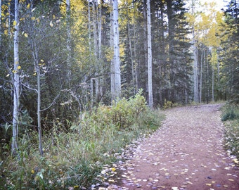 Woodland Photography Print 12x18 Fine Art Telluride Colorado Aspen Forest Trees Fall Foliage Autumn Landscape Photography Print.