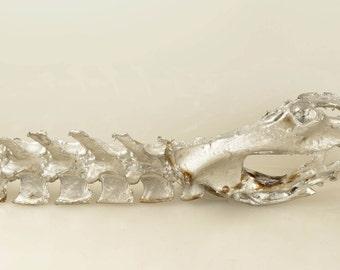 "Partial Animal Spine Column Vertebrae and Pelvis in Silver 20"" Length"