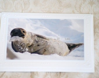 YOUNG SEAL resting on the beach in snow 5X7  Photo Greeting card blank inside. Fits in 5x7 frame for instant gift or home decor.