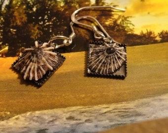 Sterling Silver, Hawaiian Kine, Small Kine, Opihi Shell, Limpet, Earrings