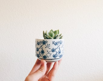 Mini Flower Print - Miniature Succulent Planter Pot Kits
