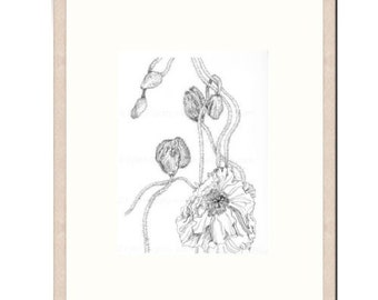 "ORIGINAL - HAND DRAWN - Botanical Ink Drawing, Flower Art, ""Poppy Study 32"". Poppy Pods, Black and White Drawing, Botanical Art"