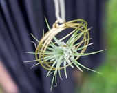 Small Tillandsia Ornaments, air plant ornaments, air plant hangers, hanging plants, bromeliads, gifts
