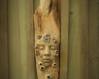 Life In All Things, Barnacle Driftwood Sculpture with Crab, Shells, Starfish by ShapingSpirit
