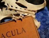 bone. rattlesnake vertebra stud/post earrings. snake earrings.