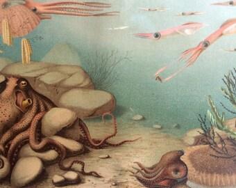 Vintage 1920 UNDERSEA CEPHALOPODA Chromolithograph Bookplate  SQUID Octopus Nautilus