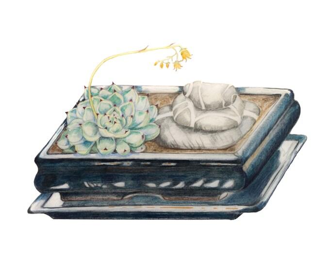 LIMITED EDITION of a Still Life with Blue Ceramic, Succulent, Irish Killiney Beach Stones, Ireland Art, Zen-like Still Life, Ireland Nature