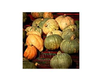 Harvest Photo, Squash, Pumpkin, Kitchen Art, Home Decor, Farmers Market, Autumn Colors
