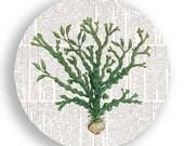Green Seaweed no.2 melamine plate