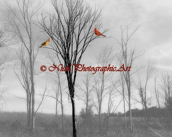 Landscape Photography Red Birds Cardinal Black and White Matted Picture Art Print A112 Trees Red Bird Black White Mist