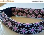 "Sale 50% Off Chocolate Brown and White & Pink Daisies Dog Collar - ""Chocolate Daisies"" - NO EXTRA CHARGE for colored buckles"
