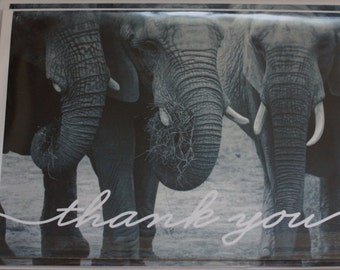 Elephant Thank You Note cards 4ct