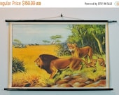 ON SALE Lion School Chart - African Wildlife Lioness, Antelopes, Giraffes, Zebra Poster Pull Down Chart - Authentic Vintage Animal Print