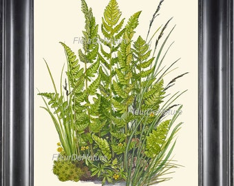 Antique Fern Lindman 8X10 Botanical Art Print 5 Antique Beautiful Green Ferns Summer Green Forest Nature Natural Science to Frame Wall Decor