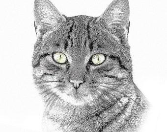 Tabby Cat - Digital cat sketch - Custom Cat Portrait - Digital Sketch - Portrait  Art from photo - Digital art - Cat sketch - Cat art