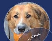 Good Dog! Pet Cookbook
