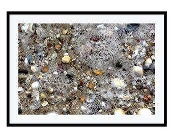 Seashell Art, Beach Print - Coastal Wall Decor, Large Photography up to 20x30 Print