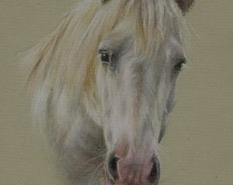 "WHITE HORSE Pastel Print 5"" x 7"""