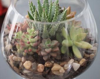 Succulent Terrarium Arrangement