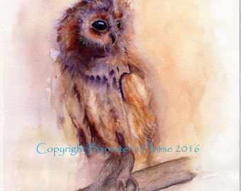 Tawny Owl, fine art, Giclee Watercolour Bird Painting Print A4. Archival quality inks