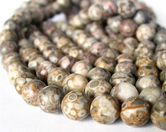 "15"" 8mm 10mm Ocean Fossil Jasper Natural Color round gemstone beads - grey brown - Half / Full strand"
