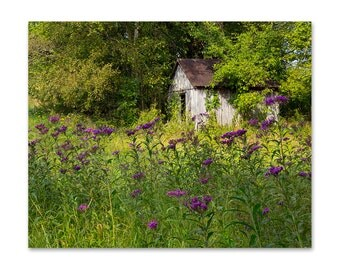 Wildflower Photograph - Wildflower Print - Purple Flower Photograph - Landscape Photography - Kentucky Photography - Purple Flower Art Print