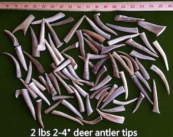 """2 lb Deer Antler Assorted Tips 2 - 4"""" (#1 & #2 antlers)"""