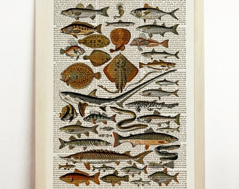 Poissons Fishes Poster Sea Life Diagram Chart Beach Seaside Marine Nautical Illustration Nature Print Upcycled Decor Art Book Dictionary