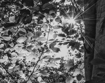 Sunburst summer leaves photo, fine art black and white photograph - woodland canopy print, various size options