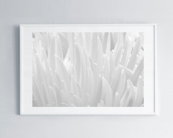 Photo Prints • White Mums • Flower • Petals • Close Up • Macro Photography