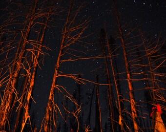 Skeleton Trees photography - nature - stars - canada landscape - decorative print - Forest