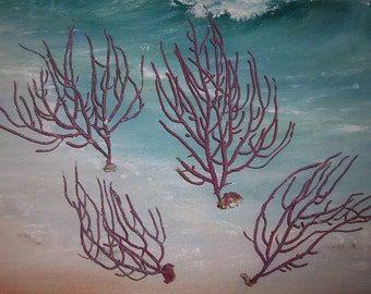Lot/4 small Lacy Red Gorgonian SEA WHIP Coral False Sea FAN from Florida Beach #31