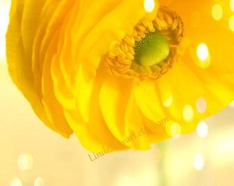 Yellow Flower Print, wall art, Yellow Ranunculus, Bedroom Decor, Yellow Flower,Yellow, Ranunculus, Bedroom,Square Image, Home Decor,