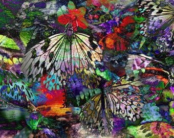 Butterflies - Photo-Graphic image file