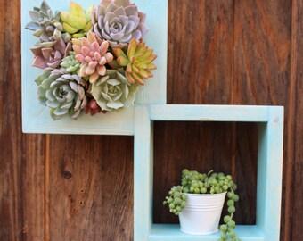 "Mini Shelf Vertical planter Succulent garden! 12.5"" x 12.5"""