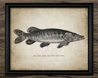 Pike Fish Print - Pike Fishing Art - Freshwater Fish - Predatory Fish - Digital Art - Printable Art - Single Print #213 - INSTANT DOWNLOAD