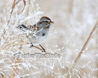 American Tree Sparrow | Winter Bird Photo | Frost | Weeds Grass | White Tan Beige | Home Office Childs Wall Art | Snow | Nature | Bird Print