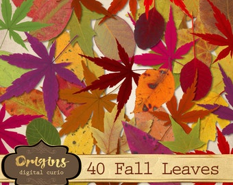 Fall Leaves Clipart, maple leaf png, colorful autumn leaves clip art, photoshop leaf overlays, fall leaf clip art graphics instant download