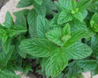 Mint Tincture