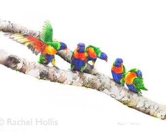 Rainbow Lorikeets - Parrots Fine Art Print