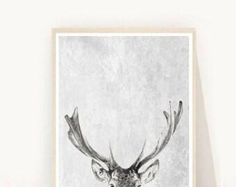 Home and Living, Deer Head Print, Wall Decor, Deer Wall Art, Printable art, Deer head photo,  instant Download, Grey Stag print