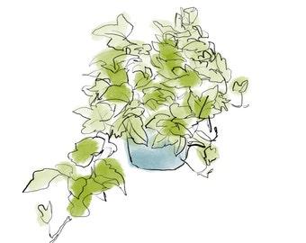 ivy plant print, digital downloadable print of plant, JPEG, printable art, clip art
