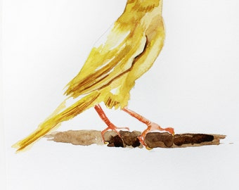 ORIGINAL Watercolor Painting, Canary Bird Yellow, yellow bird Painting, small bird, Original Animal, original bird, Art OOAK