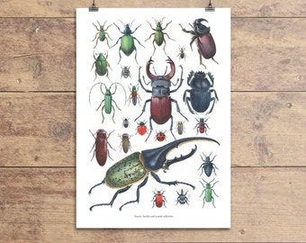 Insects, beetles and scarab collection vintage illustration print